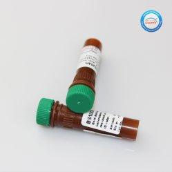 الماعز المضادة للراط IGG (H+L) Fitc