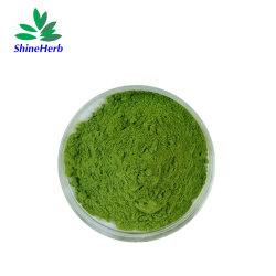 نوعية عالية من الشاي الأخضر ماتشا مسحوق ماتشا