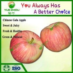 Frische Frucht-chinesische Gala Apple mit gutem geschmackvollem