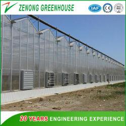 La agricultura China Multispan Hoja de PC de gases de efecto de distintos tipos de productos del sistema hidropónico