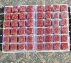 Cubi di Larvaes della zanzara/bolle rossi Frozen dei Bloodworms tropicali dell'alimento di pesci dell'acquario
