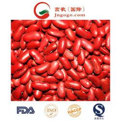 Boon van de Nier van de hoogste Kwaliteit de Rode (180-200/100G)