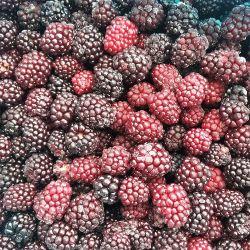 Venda por grosso IQF congelados a granel Blackberry bagas de preto