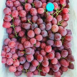Les Fruits de raisin rouge
