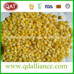 Замороженный IQF Super семян сахарной кукурузы с самого высокого качества с Kunlun Банка