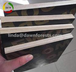 13-Ply Gostavas de material de construção de madeira contraplacada marinho/obturador contraplacado para aplicação de construção