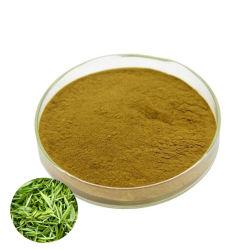جملة 10%-50% من مقتطف الشاي الأخضر من Theanine مع CAS 3081-61-6