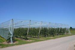 Proteção de tomates exterior de malha de Condução para protecção contra o granizo