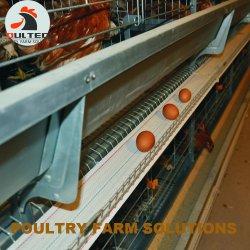 Aves de gaiola de frango Levantar equipamentos para exploração avícola em grande escala