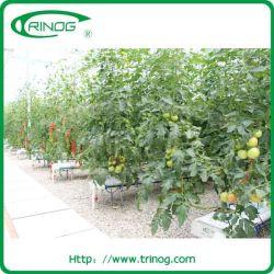 Carne de cultivo em hidroponia para o cultivo de tomate