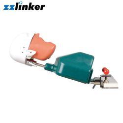Lk-OS21 mannequin dentaire Phantomhead moule Système de simulation orale pratique