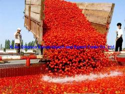 Comida enlatada OEM preço grossista- tomate fresco