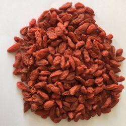 Heiße verkaufenqualität organische Goji Beeren trockneten chinesische rote Wolfberry gesunde Nahrung