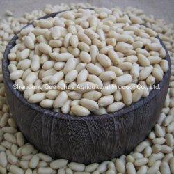 """"""" Nova Colheita de Grãos de amendoim da China"""