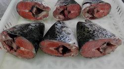 O salmão do Atlântico, cabeça de corte directo