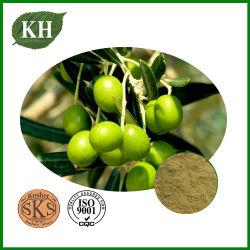 Extrait de Feuilles d'olive, l'oleuropéine 20%-80%, Hydroxytyrosol 5%-50%