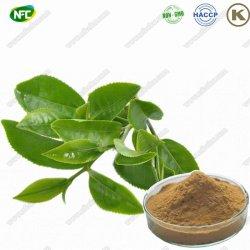 Thé naturel de la polyphénol 98 % Extrait de thé vert en poudre Extrait de thé vert avec le meilleur prix