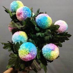 زخرفي الزهور لتجارة الجملة والتجزئة الطازجة زهرة بينغبانغ لون تشقفي لزينة