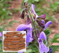 自然なTanshinol 10%-98%草のDanshenのエキスのSalvia Miltiorrhizaのエキス