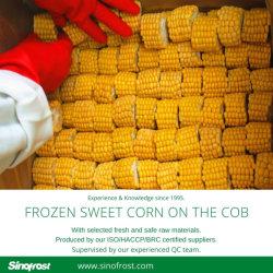Sur l'épi de maïs IQF,congelé Maïs épis,congelés sur l'épi de maïs sucré, grains entiers IQF Le maïs sucré,maïs grains entiers congelés,IQF maïs grains entiers,congelés de maïs, du noyau