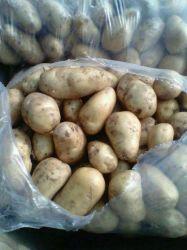 Neue Getreide-Qualität Fresj Kartoffel