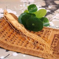 Естественных растительных извлечения лучших напиток мате женьшенем очистите женьшенем и торговли с Ginsenoside >3% травы травяной