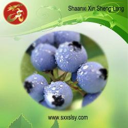 Извлеките Anthocyanidins Bilberry 25%УФ (SXL-001)