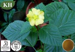 Охране здоровья Sida Cordifolia извлечения 10: 1