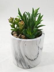 Décoration naturelle des plantes succulentes artificielle tactile