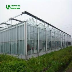Tomate/Aubergine/Pfeffer/Gemüse-Glasgewächshaus mit dem heißen galvanisierten Stahlrahmen verwendet für Landwirtschafts-Viehzucht-Aquakultur-Gaststätte