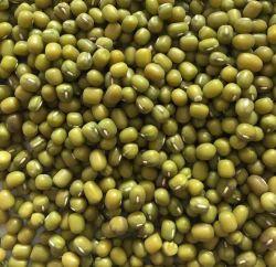 Neue Getreide-gute Qualitätsgrün-Mungobohne