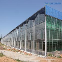 Serra di vetro della buona Multi-Portata di apparenza con buon servizio dell'installazione per l'esperimento scientifico