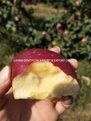 Chinesischer frischer Karton FUJI Apple der FUJI-Apple Frucht-20kg