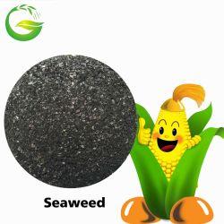 Морские водоросли извлечения удобрений в сельском хозяйстве