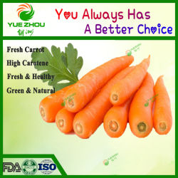 Fresh Organic Carrot S, M, L avec de qualité supérieure