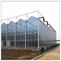 نظام الري بالأسمنت بالأسمنت الصيني طماطم الفراولة الزراعة الإطار الفولاذي يمتد موتي إلى المنازل الخضراء المصنوعة من البولي كربونات