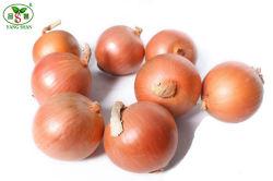 Nueva calidad fresca cebolla verduras de color amarillo con la certificación de brecha mundial