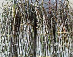 La imitación de la naturaleza Dendrobium Candidum Dendrobium orgánicos frescos Officinale Dendrobium Candidum Tiepishihu Dendrobium Candidum Tiepifengdou Flor