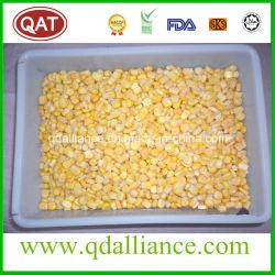 Замороженный IQF Super семян сахарной кукурузы с ни один из ГИО экспорт в Иран