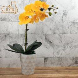 POT di fiore di ceramica geometrico da 5 pollici con il prezzo modico