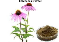 Extrato de Echinacea em pó com 4% polifenóis