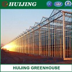 Pépinière commerciale/agricole serre solaire en verre/fleur avec une haute qualité des matériaux de construction avec système de culture de la culture hydroponique de serre pour la tomate