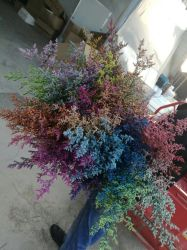 다중 색깔 보존했다 화초 재배자의 마음에 드는 것으로 꽃 충전물 플랜트를 분류하십시오