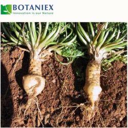 Herbes 100% naturel extrait de maca