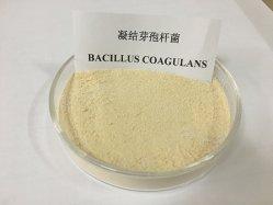 Additivo alimentare per promuovere la digestione Bacillus coagulans probiotico ad alto contenuto