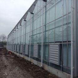 Estufa de Vidro tipo Venlo com aço galvanizado estrutura estável do sistema de cultivo em hidroponia para passeios turísticos/ Morango// Pepino Tomate Produto Agrícola