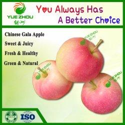 Gala chino dulce de manzana manzana roja para la venta con precios baratos