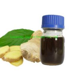 Olio di zenzero puro estratto di radice di zenzero per supplemento di salute