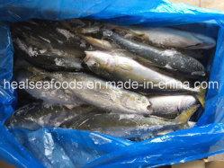 Pesce congelato giallo coda 500-1000g in vendita