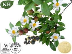 고품질 동백나무 씨 추출 차 사포닌 18%-90%